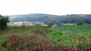 Eine schöne Herbstlandschaft